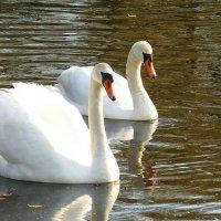 Два лебедя :: Маргарита Батырева