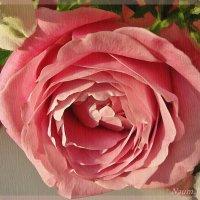 Пишу розу акварелью :: Лидия (naum.lidiya)