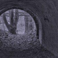 Тунель :: klara Нейкова