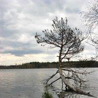 На хмуром озере с название Ласковское... :: Лена L.