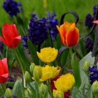 Весенний цветочный микс.. :: Юрий Анипов