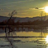 солнце - в воду :: Tatyana Belova