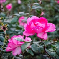 Ботанический сад :: Lika Jena