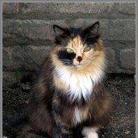 Кошка :: Павел Галактионов