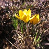 Весна :: Дарья