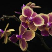 Забавный цветочек... :: Лариса Н