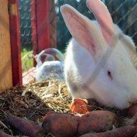 Кролик :: Elena N