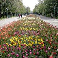 В парке :: Олег