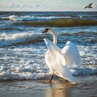 white swan :: Oleg K