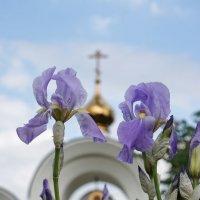 Христос воскрес :: Андрей Майоров
