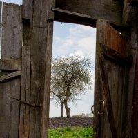 Сельский пейзаж :: Elena Moskina