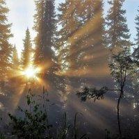 Утро в пихтаче :: Сергей Чиняев
