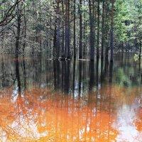 Отражаясь в зеркале воды... :: Лесо-Вед (Баранов)