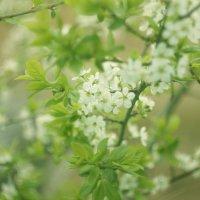 весна :: Мария Фокина