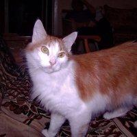 Вот такой я кот! :: Tarka