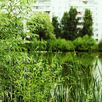 Городские красоты :: Marina Shakhova
