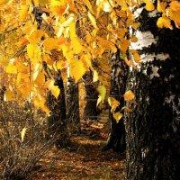 Среди  дерев.... :: Валерия  Полещикова