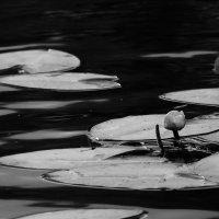 На  том  пруду.... :: Валерия  Полещикова