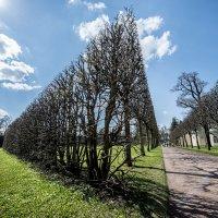 Царское село. Екатерининский парк. :: Dmitriy Sagurov