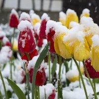 Весна... :: Viktor Schnell