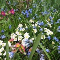 Весенние цветы :: Валюша Черкасова