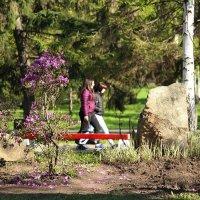 весна- цветение багульника... :: Ирина