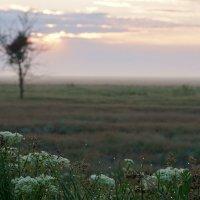 Рассвет в Калмыцкой степи :: Александр Попов