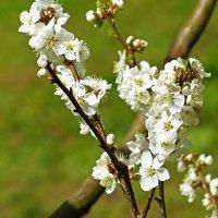 Вот и весна :: Рднасклеа Вонелыпаз