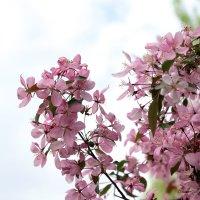 Майские цветочки. :: Сергей Касимов