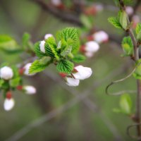 весна :: Tiana Ros