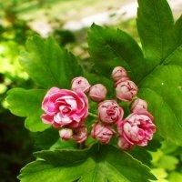природа Крыма :: elena manas