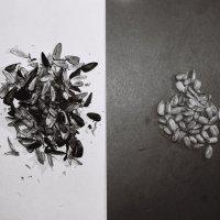 Черно-белая сторона семечек :: Саша Суфранс