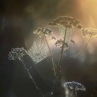 ..если поймать солнце.. :: Галина Юняева