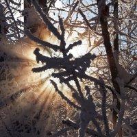 И опять про зиму... :: Александр Попов