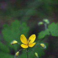 Flower_77 :: Trage