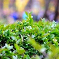 Весна пришла! :: ID@ Cyber.net