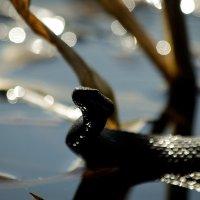 змеюшка :: Андрей Соловьёв