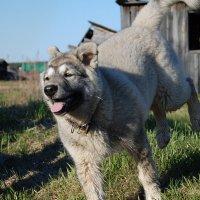 Восторг щенячий. :: Arcadii Mayrhofen
