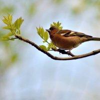 Птичка на ветке.. :: Юрий Анипов
