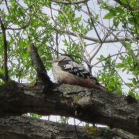 На дереве дятел :: Дмитрий Никитин