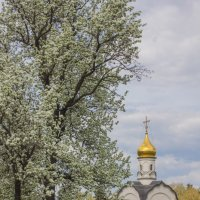 цветущее дерево на ВДНХ :: Дмитрий Сушкин