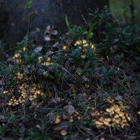 Весенние грибы :: Эдуард Богомол