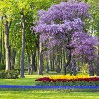 В парке г. Гомель, Беларусь :: Марина