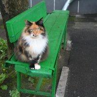 Чудо,а не кошка. :: Неля