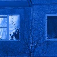 Японский ужастик «Девочка с кошкой». Кемерово, декабрь :: Edward Metlinov