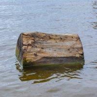 бревно в озере :: Света Кондрашова