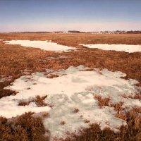 Рыжая весна :: Валерий Талашов