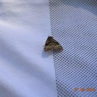 бабочка :: Екатерина кондинская