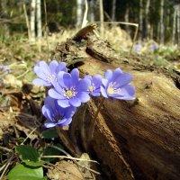 Весна :: Елена Якушина