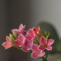 Flower_72 :: Trage